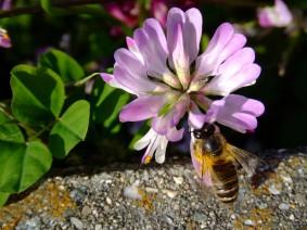 ミツバチの日